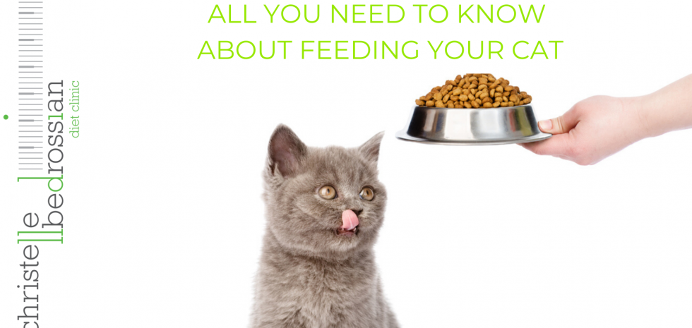 all you need to know about feeding your cat